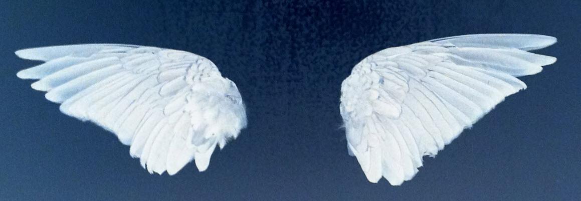 vleugels1