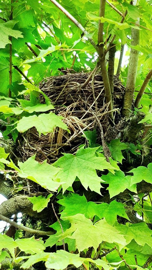 Leave Nest | Onbestempeld.nl
